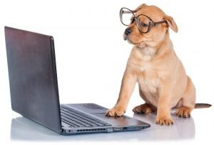 Laptop Dog